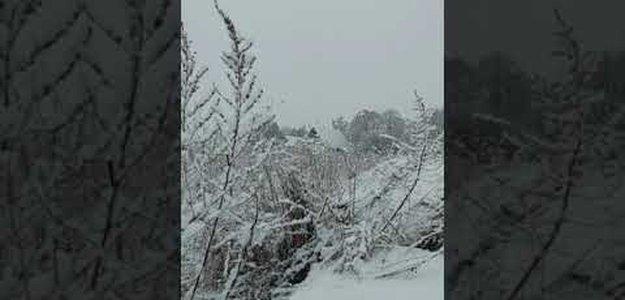 Как 28 апреля 2021 года в Ленобласти зима посреди весны наступила