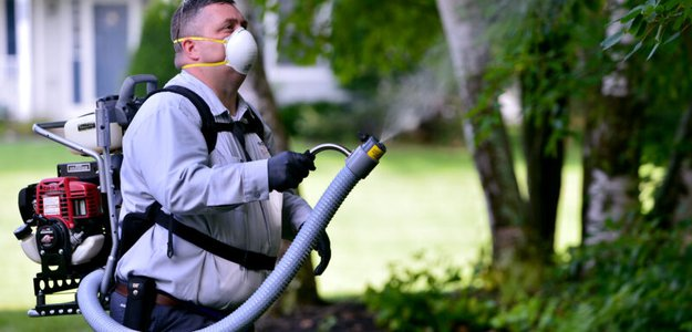 Pest Control for your Home: Easy and Powerful Solutions