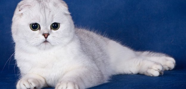 Как назвать кота: самые популярные клички