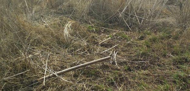 Жечь или не жечь траву на огороде?