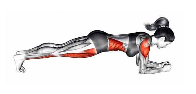 Какие мышцы работают в планке