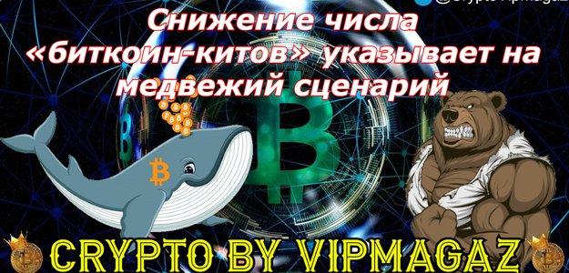 Снижение числа «биткоин-китов» указывает на медвежий сценарий
